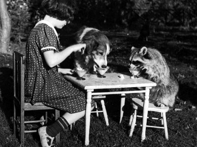 Claire-shorrock-giving-ice-cream-party-with-pet-dog-and-raccoon_large