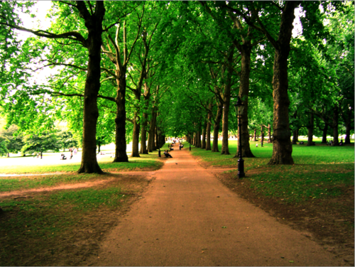 London_hyde_park__s_trees_by_arnofr_large