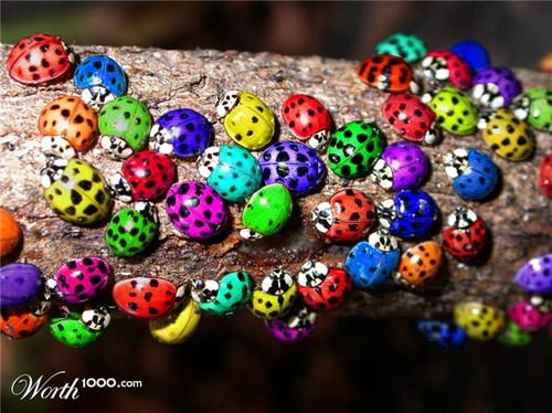Lady bugs - Worth1000 Contests