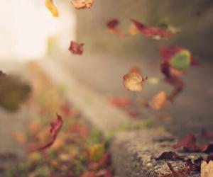 autumn