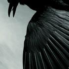 Navy Bird