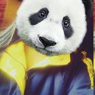 I'm a panda.