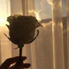 🌻 Flor 🌻