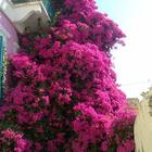 Marina St