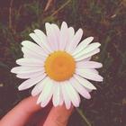 Virág Toldy