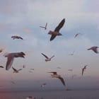 Julia Leppäharju ️♔