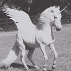 unicorn *_*