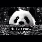 baby panda don't need no drama