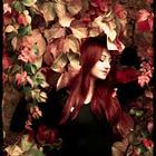 Roses Fanèes