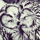Snowball ❄️⛄️