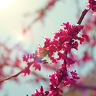 Pinkmagicdoll ❤️