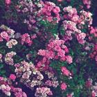 ✖ Claret Red ✖  ♔♡♪