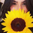 K.Sunflower?