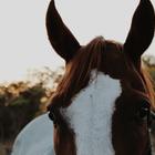 Horse-crazy