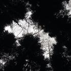 Black_forest_girl