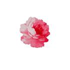 Rose'M🌿