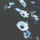 azul_GC ♡