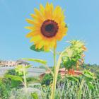 ·Flowers·
