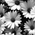 ∆•Neriî•∆