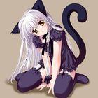 Shadow Kat