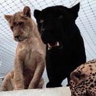 Людмила Морозов