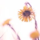 Kukkatytto