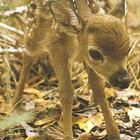 Bambii