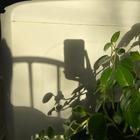 I wish 2 b covered w plants