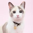 ジュピター猫