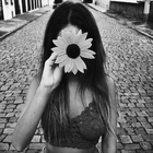 sunflower_1o
