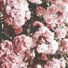 blüüümchen♥