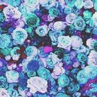 Lellie