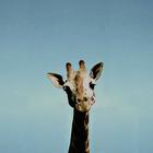 DepressedGiraffe