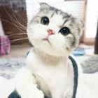 ママの子猫~♡
