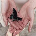 la folle aux papillons