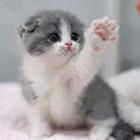 !!Niki!!