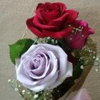 وردة الشام