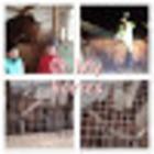 oh my horses