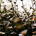× FlowerQueen ×