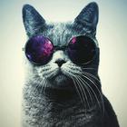 hipstercat