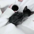•Kitten•