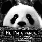 08.08. it's panda's birthday on this day.