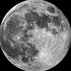 Luna♀