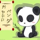 PandaLover1677