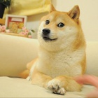 Doge with a Bloge