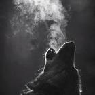 Ying Wolf