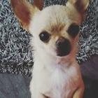 jolie_wadephul