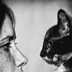 The Modern Lover Cat