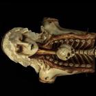 Min DaeSuk