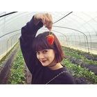 cherry_